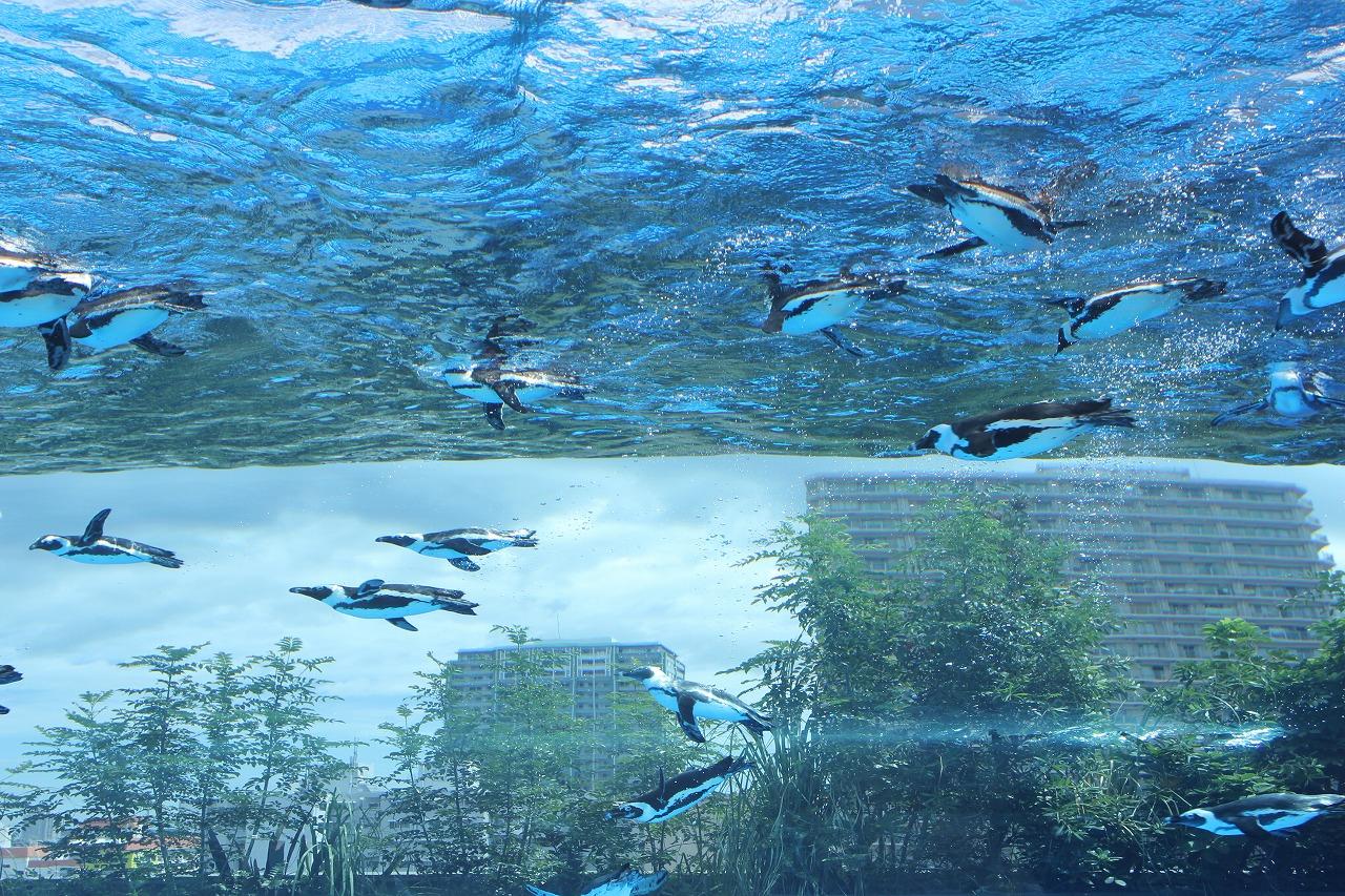 サンシャイン水族館1