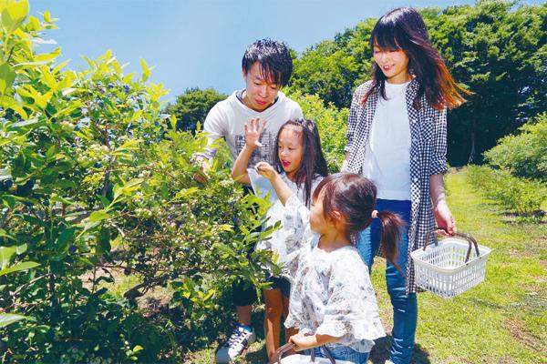 【埼玉】ブルーベリー・ブドウ・ナシ狩り