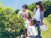 【埼玉】 ブルーベリー・ブドウ・ナシ観光農園
