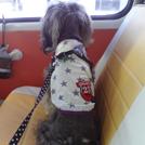 【府中】ペットがいないと乗れません!安心を運ぶ「ペットタクシー・smile(スマイル)」