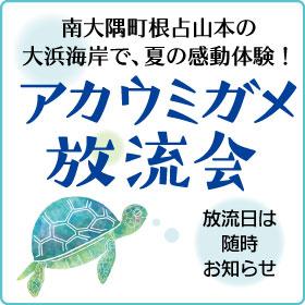 夏休み最後の思い出に!8/26夕方から、南大隅町大浜海岸で子ガメの放流会開催