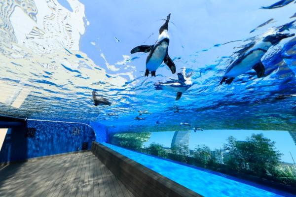 UP天空のペンギン