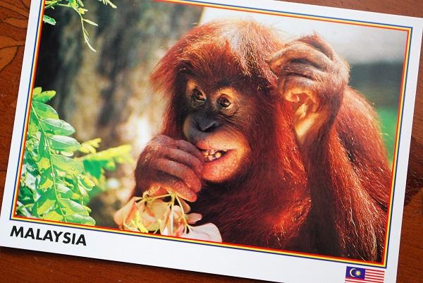 orangutan tea