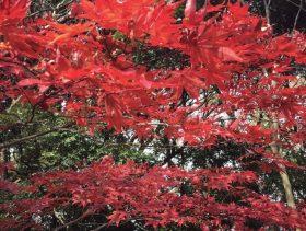 日本に生まれて良かった♫【まるで燃えてる⁈秋を楽しみに〜いざ鎌倉へ】