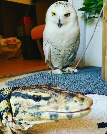 フクロウ&ヘビ