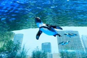 【あなまち東京 8月最優秀賞】chibineko_gogoさん「天空のペンギン」に!