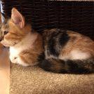お洒落な猫カフェMOCHA(モカ)。なんと漫画喫茶としても使える!@栄