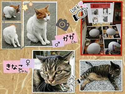 前玉神社・猫2匹