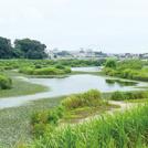 境川沿いの秋探し「大和・藤沢自転車道」を走る (湘南 2017年9月23日1439号)