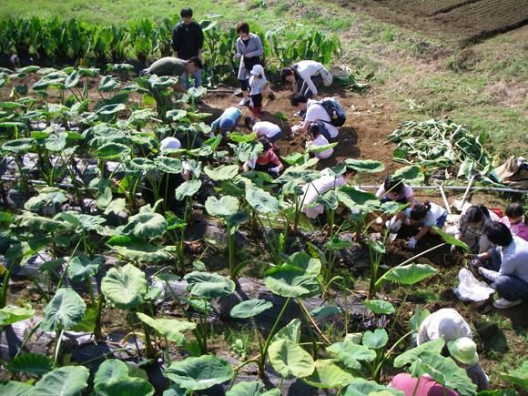 コヤタ農園
