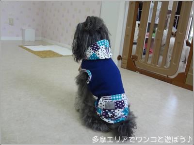 犬のようちえん「wamiハッピードッグ」