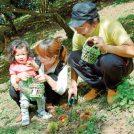 秋の実りを収穫しよう!【味覚狩りガイド 大阪】