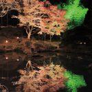 P松島ライトアップ池にうつっているやつ