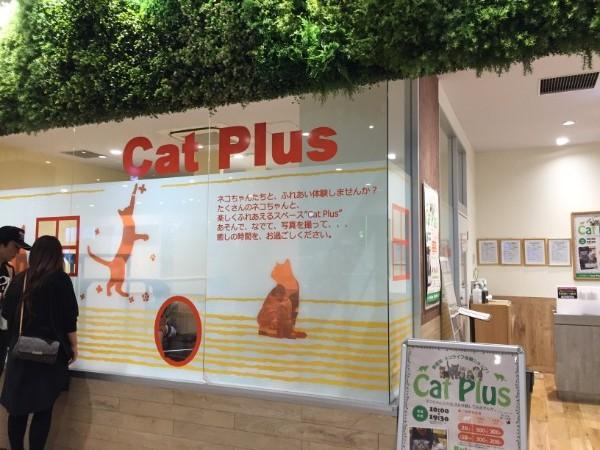 catplus03