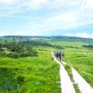 八幡平の木道、池塘と高山植物