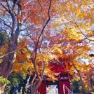 kashiwa_hitachi_eye