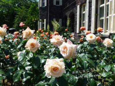 【秋バラ散策①】旧古河庭園♡大正ロマン感じる洋館と秋バラが美しい