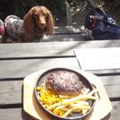 【福生】テラス席でお肉を堪能♪ステーキ&ガーデンBBQ「ヤブツバキ」