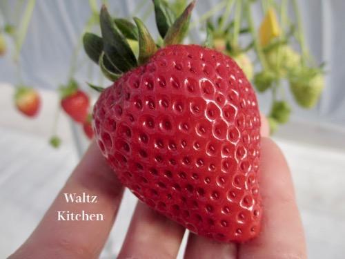 1712_berry