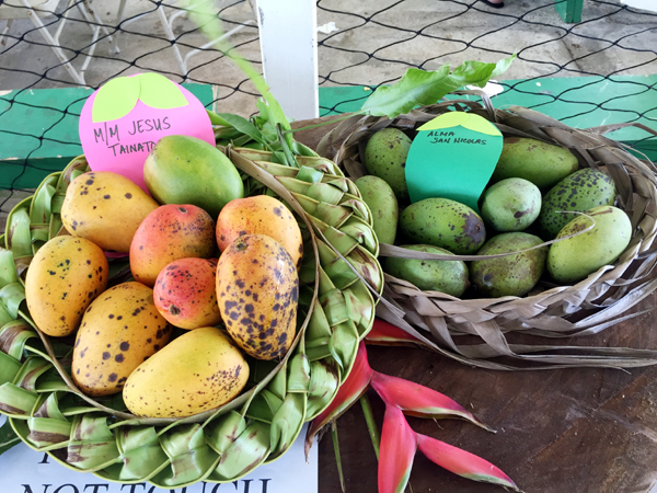 Agat_Mango_Festival_competition.jpg