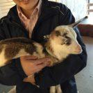 都会のオアシス大手町牧場! ビルの中でかわいいヤギやミニブタに会える♡