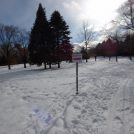 冬期間限定!  中島公園で歩くスキーを楽しみませんか?