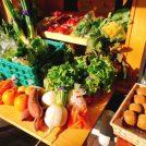 週2日限定!地元野菜とイタリアン惣菜を販売「パリタリー」@武蔵小金井