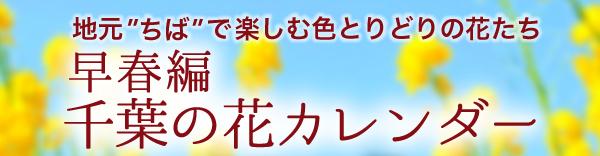 """スイセン、梅、桜、菜の花、チューリップ…。千葉の花カレンダー""""早春編"""""""