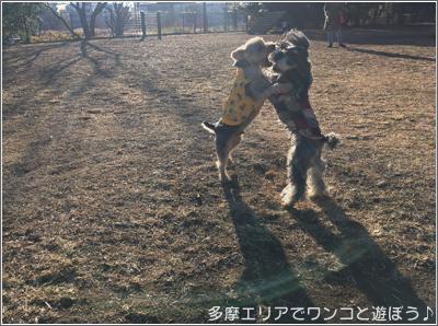 国営 昭和記念公園ドッグラン