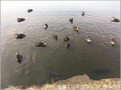 国営 昭和記念公園の池