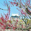 【2018年の梅はここで見る!】大阪エリアの梅の名所 6選