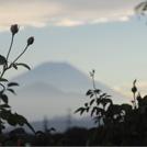 【TOPICS】富士山の絶景も楽しめるローズカフェ