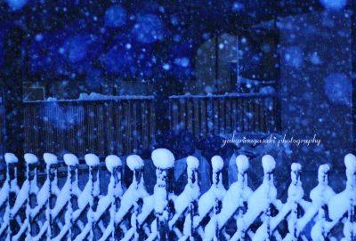 雪たまボケ