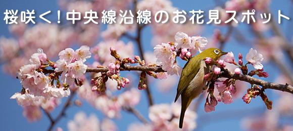 tokushu_top0301hanami