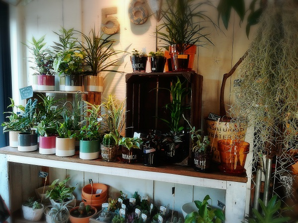 【たまプラーザ】住宅街にこんな素敵な場所が!『Botanical56』