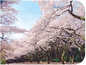 桜の季節はたくさんの人