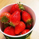 超甘くて密かに大人気!松山市の穴場イチゴ狩りスポット@まつもとファーム