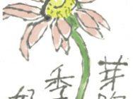 P絵手紙(ガーベラ)熊田先生