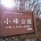 春だ!桜だ!お花見にもおすすめ!都立小峰公園@あきる野市