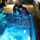 レゴランド、4月にホテルと水族館をオープン。名古屋観光を後押し