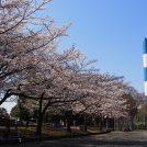 今まさに見頃♪お花見も楽しめる春休みにおススメの穴場公園、東方公園@都筑ふれあいの丘