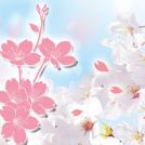 〈地域特派員&千葉ブロガーがおすすめ〉お花見スポット