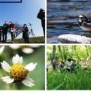 あなたも参加してみませんか「平成30年度相模原市自然環境観察員」募集中