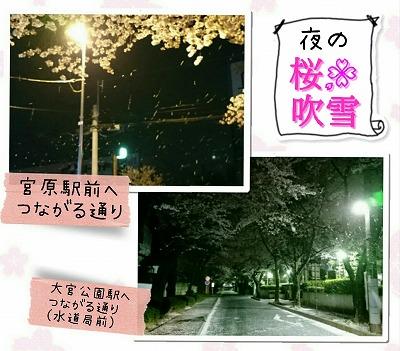 夜の桜吹雪