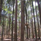 3/17(土)オープン! 泉自然公園内 フォレストアドベンチャー・千葉で体験してきました!
