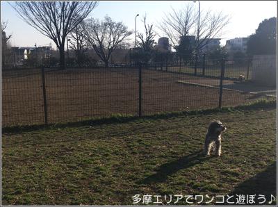 昭和記念公園ドッグラン