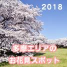 【特集】2018年「多摩エリアのお花見スポット」情報♪