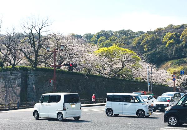 turumaru_sakura