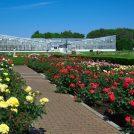 180428神代植物公園_H28_春_3_バラ園と大温室