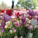 4/1から小・中学生は入園無料に!GWは昭和記念公園に出掛けよう!